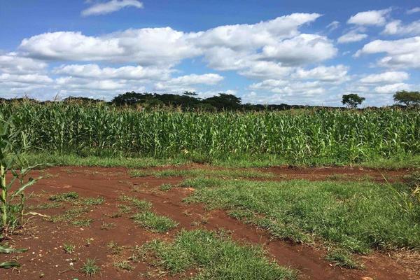 Foto de rancho en venta en  , hecelchakan, hecelchakán, campeche, 7513382 No. 06