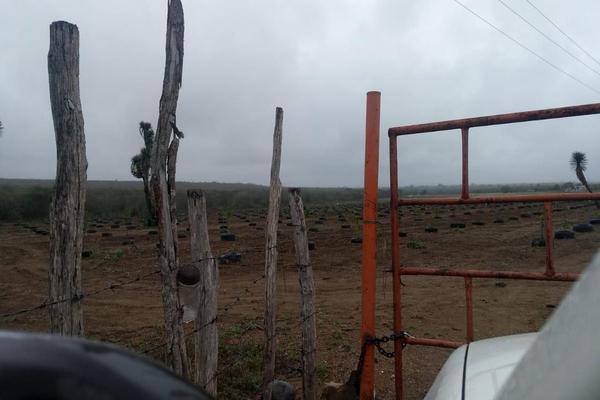Foto de rancho en venta en  , hualahuises centro, hualahuises, nuevo león, 18895585 No. 03