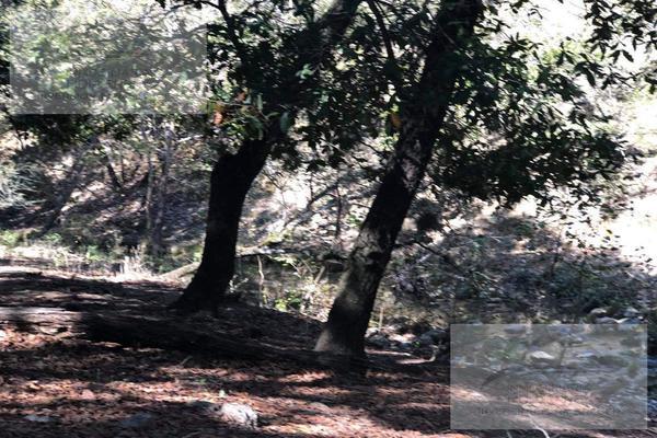 Foto de terreno habitacional en venta en  , hualahuises centro, hualahuises, nuevo león, 0 No. 34