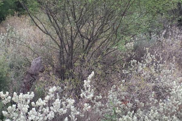 Foto de terreno habitacional en venta en humberto moreira y guadalupe sanchez galvan , ejido piedras negras, piedras negras, coahuila de zaragoza, 3565355 No. 22