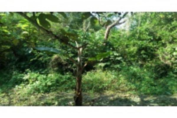 Foto de terreno habitacional en venta en ignacio allende , granjas de alto lucero, tuxpan, veracruz de ignacio de la llave, 5966462 No. 04