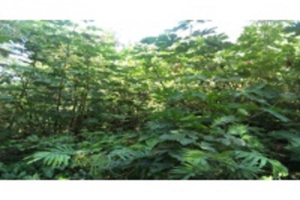 Foto de terreno habitacional en venta en ignacio allende , granjas de alto lucero, tuxpan, veracruz de ignacio de la llave, 5966462 No. 05