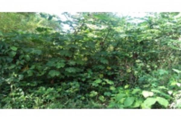 Foto de terreno habitacional en venta en ignacio allende , granjas de alto lucero, tuxpan, veracruz de ignacio de la llave, 5966462 No. 07