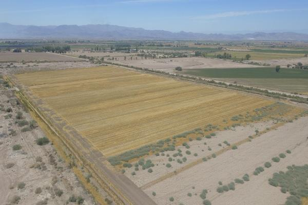 Foto de terreno habitacional en venta en  , islas agrarias b, mexicali, baja california, 12813455 No. 02