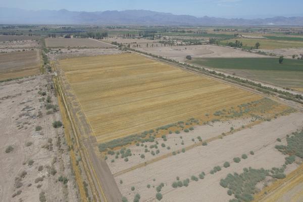 Foto de terreno habitacional en venta en  , islas agrarias b, mexicali, baja california, 12813455 No. 05