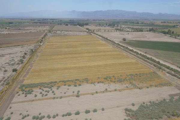 Foto de terreno habitacional en venta en  , islas agrarias b, mexicali, baja california, 12813455 No. 06