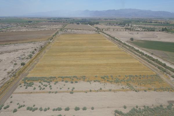 Foto de terreno habitacional en venta en  , islas agrarias b, mexicali, baja california, 12813455 No. 07