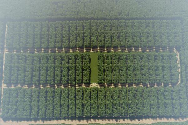 Foto de terreno habitacional en venta en  , ixchel, benito juárez, quintana roo, 0 No. 03