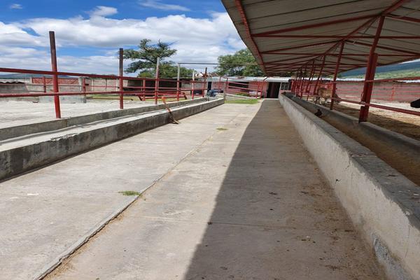 Foto de terreno comercial en renta en  , ixtlahuaca, san martín de las pirámides, méxico, 18423325 No. 14