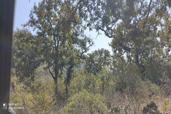 Foto de terreno comercial en venta en jalpan de serra , villas jalpan, jalpan de serra, querétaro, 20069028 No. 08