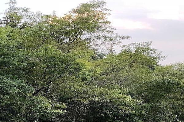 Foto de terreno habitacional en venta en  , jardines de la florida, naucalpan de juárez, méxico, 14595370 No. 27