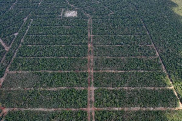 Foto de terreno habitacional en venta en  , josé maría morelos, josé maría morelos, quintana roo, 16277477 No. 14