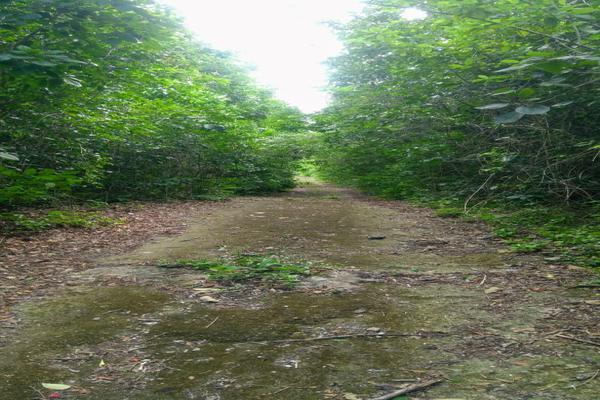 Foto de terreno habitacional en venta en juan galvan , alfredo v bonfil, benito juárez, quintana roo, 0 No. 04