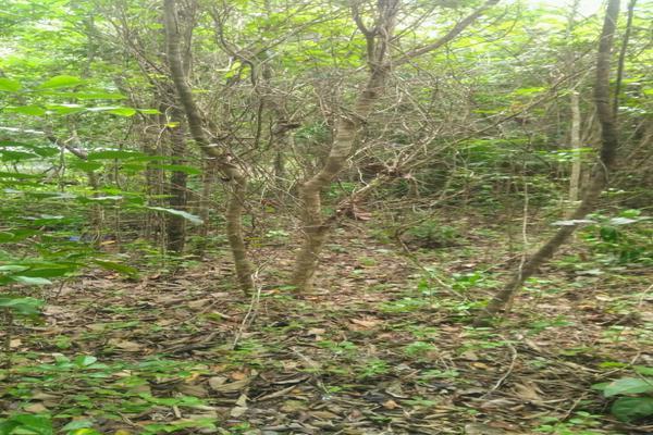 Foto de terreno habitacional en venta en juan galvan , alfredo v bonfil, benito juárez, quintana roo, 0 No. 08