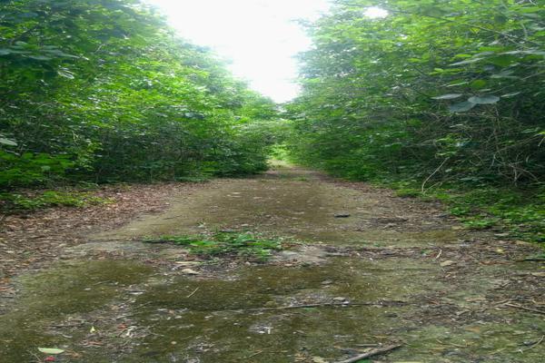 Foto de terreno habitacional en venta en juan galvan , alfredo v bonfil, benito juárez, quintana roo, 0 No. 09