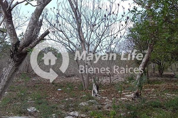 Foto de terreno habitacional en venta en  , tixkokob, tixkokob, yucatán, 3427921 No. 03