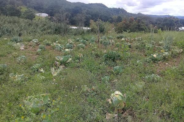 Foto de terreno habitacional en venta en kilometro 112 , teopisca, teopisca, chiapas, 5921137 No. 01