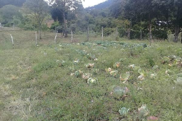 Foto de terreno habitacional en venta en kilometro 112 , teopisca, teopisca, chiapas, 5921144 No. 01