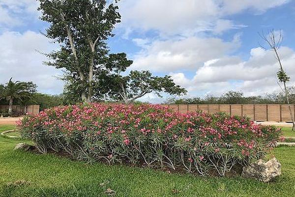 Foto de terreno habitacional en venta en kilometro 15 carretera merida-progreso , club de golf la ceiba, mérida, yucatán, 14027410 No. 08