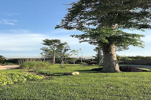 Foto de terreno habitacional en venta en kilometro 15 carretera merida-progreso , club de golf la ceiba, mérida, yucatán, 14027410 No. 10