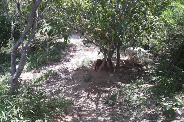 Foto de terreno habitacional en venta en kilometro 30, guerrero 8, kilómetro 30, acapulco de juárez, guerrero, 9121147 No. 09