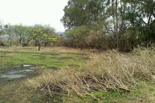 Foto de terreno habitacional en venta en kilometro 88 , totolapan, totolapan, morelos, 14348208 No. 08