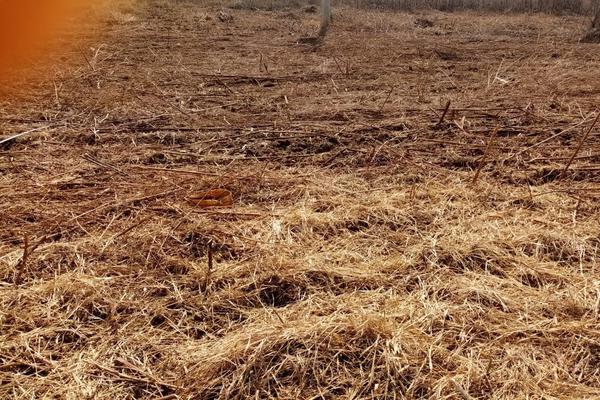 Foto de terreno habitacional en venta en la barranca s/n , paraje los pintos, san lorenzo cacaotepec, oaxaca, 16712521 No. 02