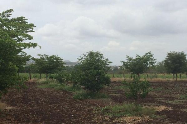 Foto de terreno habitacional en venta en  , la lima, culiacán, sinaloa, 2627240 No. 06