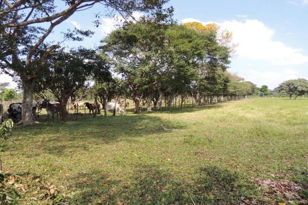 Foto de terreno habitacional en venta en laguna de los limones , huimanguillo, huimanguillo, tabasco, 8294017 No. 06