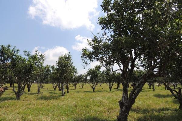 Foto de terreno habitacional en venta en laguna de los limones , huimanguillo, huimanguillo, tabasco, 8294017 No. 07