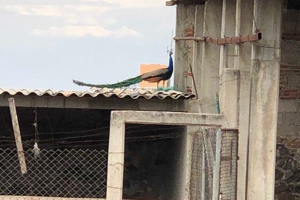 Foto de terreno habitacional en venta en  , las corraletas (familia castillo), tequisquiapan, querétaro, 10024991 No. 07