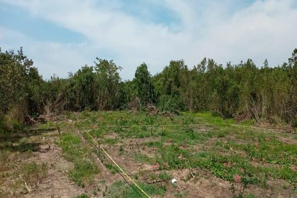Foto de terreno habitacional en venta en lazaro cardenas 5 , aticama, san blas, nayarit, 19348325 No. 01