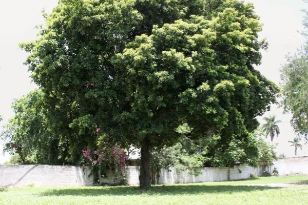 Foto de rancho en venta en  , lázaro cárdenas, mérida, yucatán, 5693359 No. 31