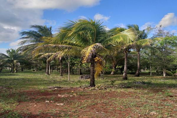 Foto de terreno habitacional en venta en leona vicario , leona vicario, othón p. blanco, quintana roo, 8308338 No. 01