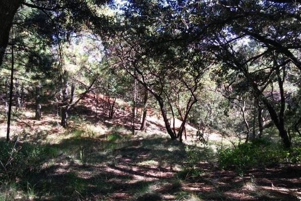 Foto de terreno habitacional en venta en loma de la hacienda , boca negra, villa del carbón, méxico, 6149663 No. 06