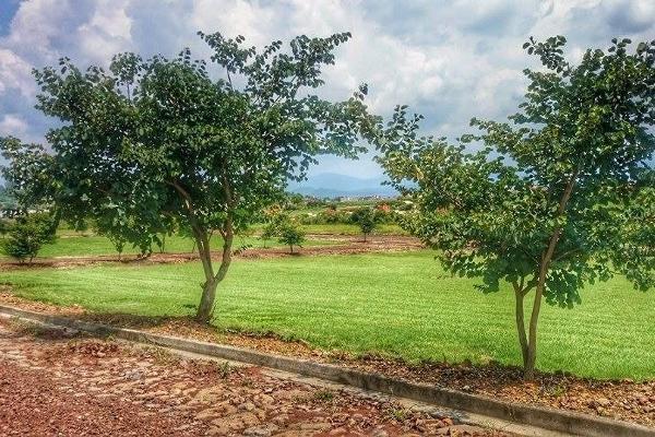 Foto de terreno habitacional en venta en  , loma linda, tangancícuaro, michoacán de ocampo, 3427680 No. 01