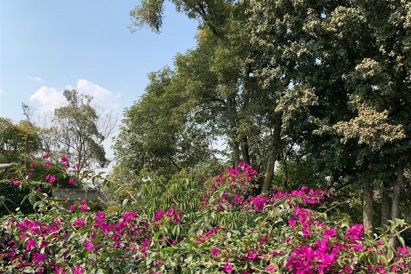 Foto de casa en renta en  , lomas de chapultepec vii sección, miguel hidalgo, df / cdmx, 14025869 No. 01