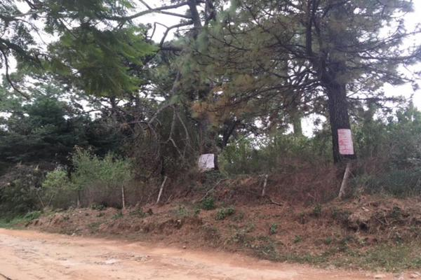 Foto de terreno habitacional en venta en  , lomas de zompantle, cuernavaca, morelos, 5442827 No. 06