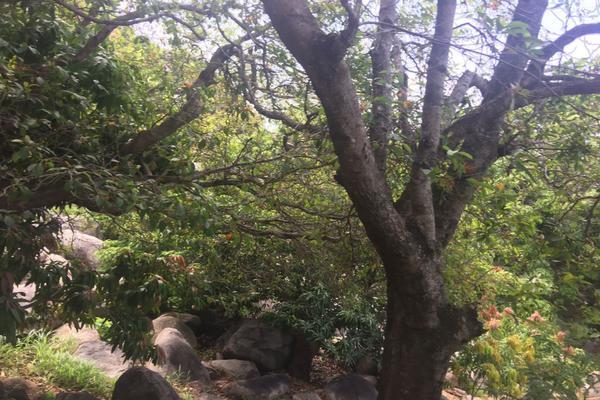 Foto de terreno habitacional en venta en  , lomas del marqués, acapulco de juárez, guerrero, 7293701 No. 11