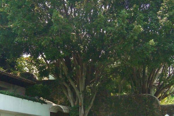 Foto de casa en venta en  , los limoneros, cuernavaca, morelos, 5293862 No. 28