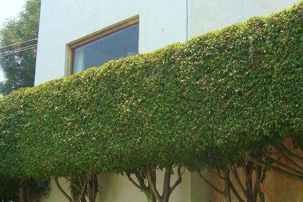 Foto de casa en venta en  , los limoneros, cuernavaca, morelos, 5293862 No. 29