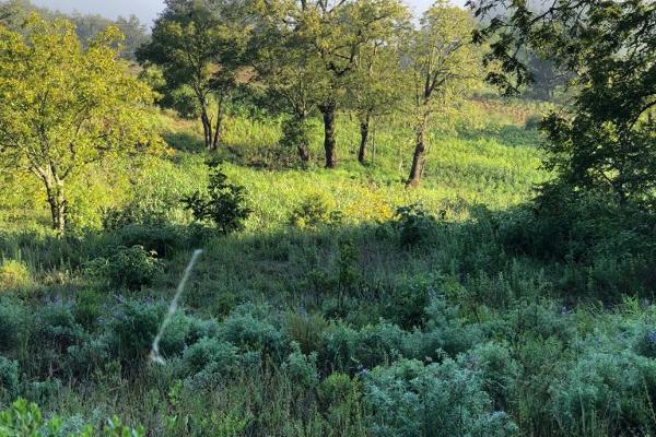 Foto de terreno comercial en venta en los nogales , san josé capulines, mineral del chico, hidalgo, 6153353 No. 04
