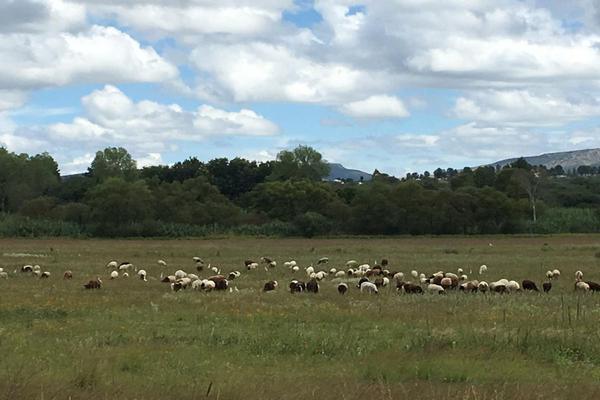 Foto de rancho en venta en  , los ricos de abajo, san miguel de allende, guanajuato, 7299933 No. 21
