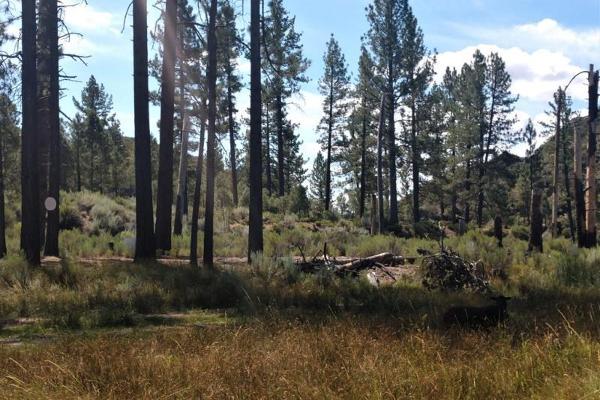 Foto de terreno comercial en venta en lote 64 z-1 p1/1, sierra de juarez , rosa de castilla, ensenada, baja california, 9209314 No. 10