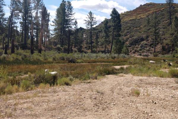 Foto de terreno comercial en venta en lote 64 z-1 p1/1, sierra de juarez , villa de juárez, ensenada, baja california, 9209314 No. 09