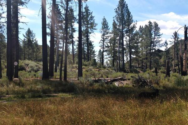 Foto de terreno comercial en venta en lote 64 z-1 p1/1, sierra de juarez , villa de juárez, ensenada, baja california, 9209314 No. 10