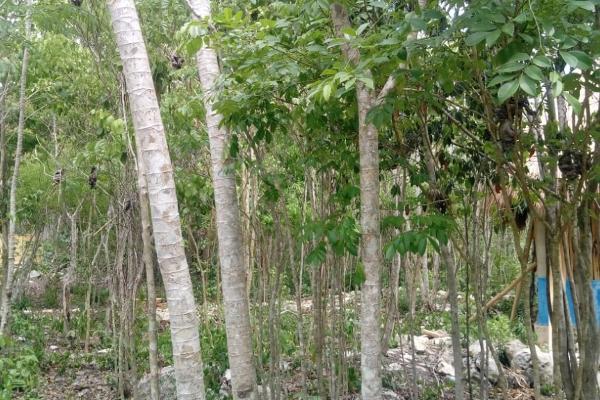 Foto de terreno habitacional en venta en macario gomez manzana 18 lote 52 , tulum centro, tulum, quintana roo, 7506303 No. 08