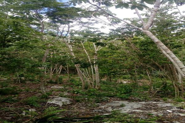 Foto de terreno habitacional en venta en macario gomez manzana 18 lote 52 , tulum centro, tulum, quintana roo, 7506303 No. 09