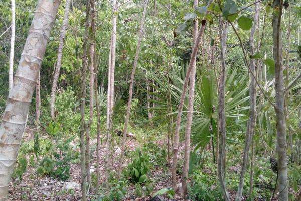 Foto de terreno habitacional en venta en macario gomez manzana 18 lote 52 , tulum centro, tulum, quintana roo, 7506303 No. 12