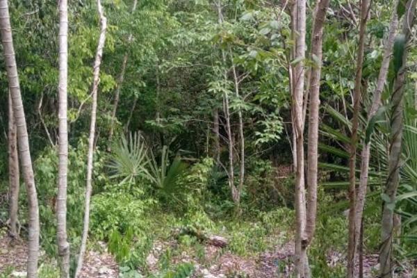 Foto de terreno habitacional en venta en macario gomez manzana 18 lote 52 , tulum centro, tulum, quintana roo, 7506303 No. 16